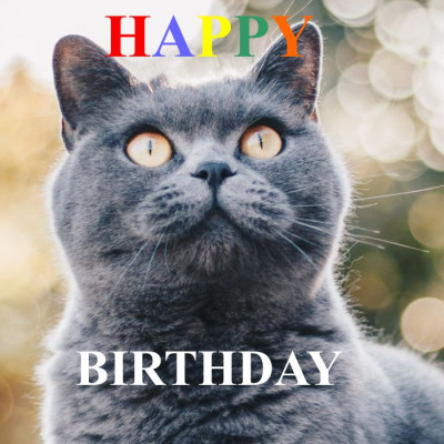 happy-birthdy-katze
