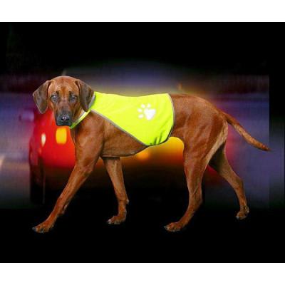 Karlie SAFETY-DOG...