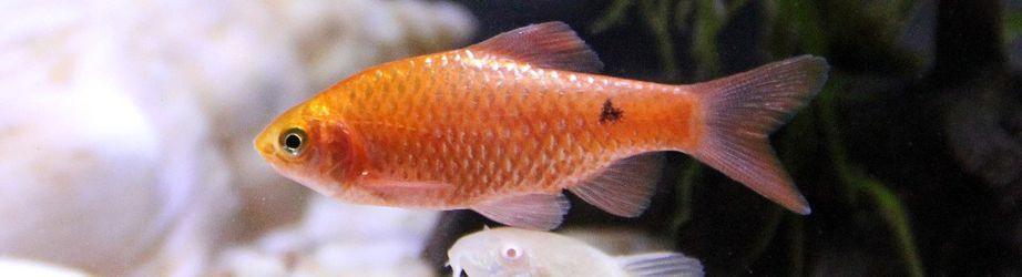Fische in Paulas Tiershop: Aquarienbedarf, Futter, Zubehör