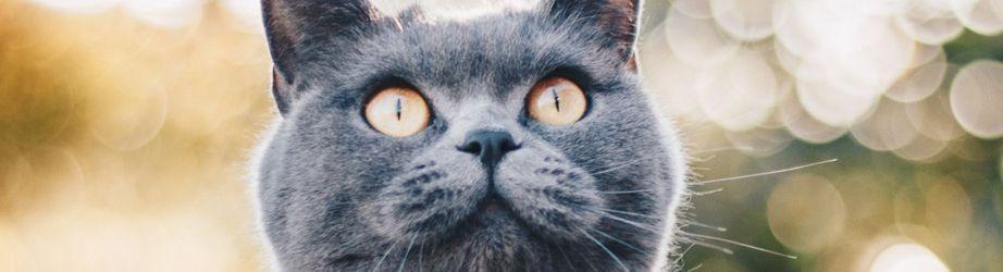 Für die Katze nur das Beste: Nahrung, Körbchen, Spielzeug