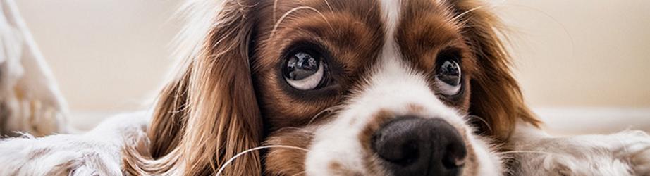 Alles für den Hund: Nahrung Futter Betten Halsband Spielzeug