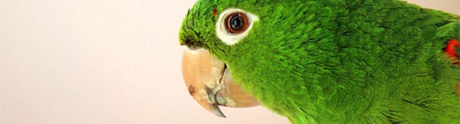 Vogelbedarf preiswert kaufen im Online-Shop von Paulas Tiershop